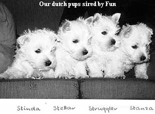 Our dutch pups sired by Fun