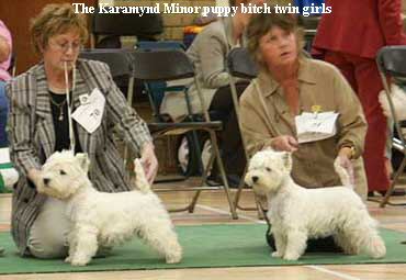 The Karamynd Minor puppy bitch twin girls