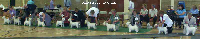 Minor Puppy Dog class